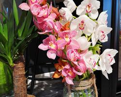 Orchidées Cymbidium - Albertville - JULALIE