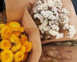 Fleurs séchées - JULALIE